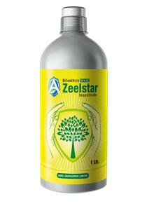 Zealstar